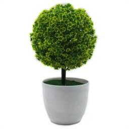 Planta maceta decorativa de hoja redonda