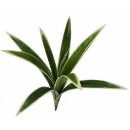 Planta tallo artificial de 9 brotes - sintetica